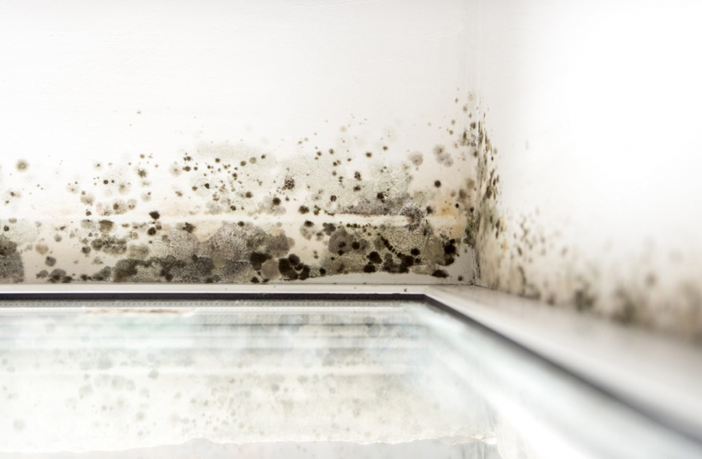 mold removal at home